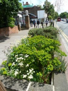 high street flower beds